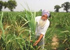 Balwinder Singh: Can't access subsidies, frustrated with government policy