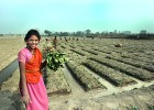 Vegetables grown on the banks of the contaminated Yamuna