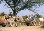 Tourists enjoy a ride in Rajasthan